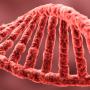 slide2_DNK